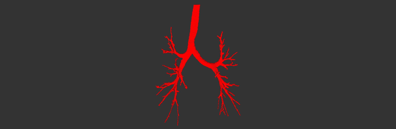 3D Simulator Of Tubular Organs